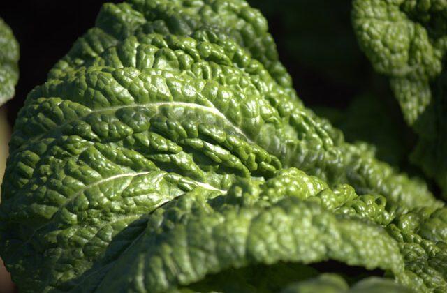 warzywa, kalerosse